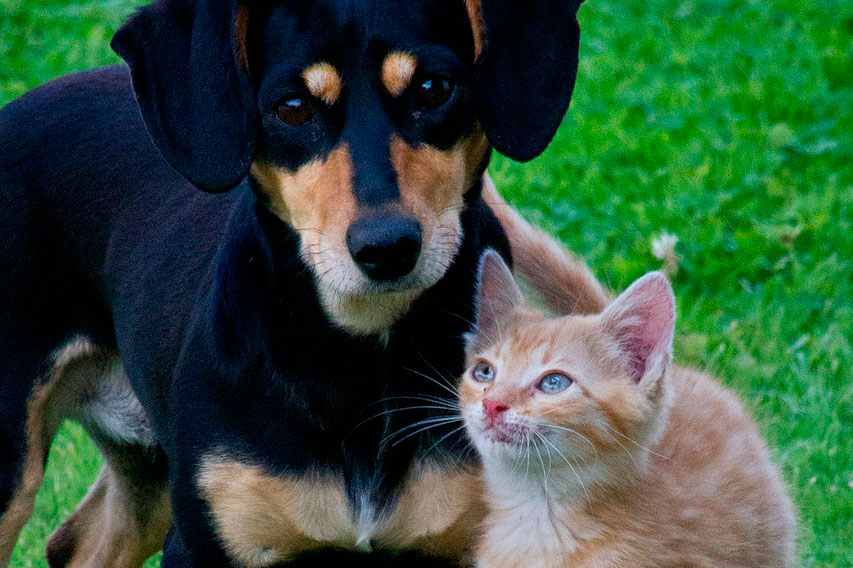 Assicurazione per Animali Domestici